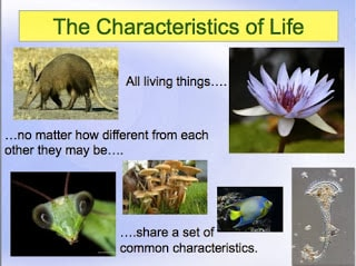 Characteristics of Life: A FREE PowerPoint