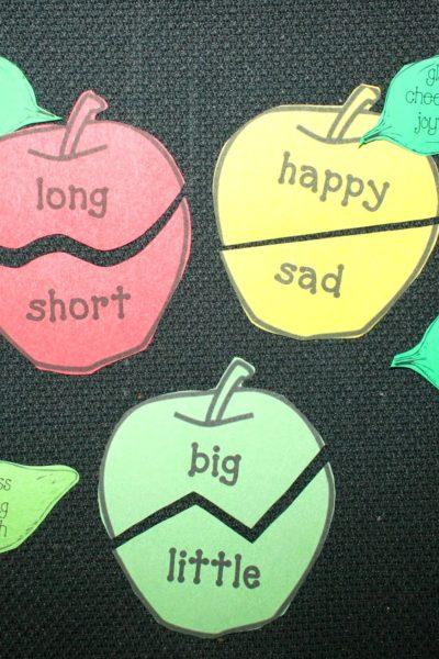 Synonym Antonym Apples