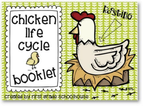 photograph about Life Cycle of a Chicken Printable identify Bird Daily life Cycle - Clroom Freebies